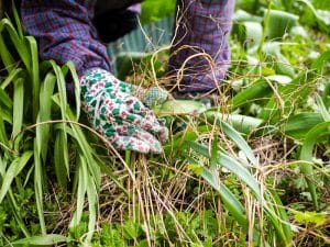How to weed your garden like a pro
