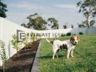 Backyard-Fence-Garden-Dog