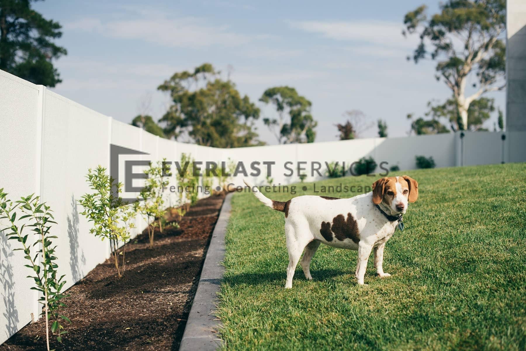 MW 53 - Backyard Fence Garden + Dog