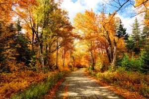 Using autumn leaves to your advantage
