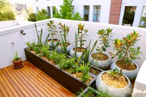 Rooftop garden in a small urban spaces