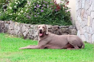 How to dog proof your yard