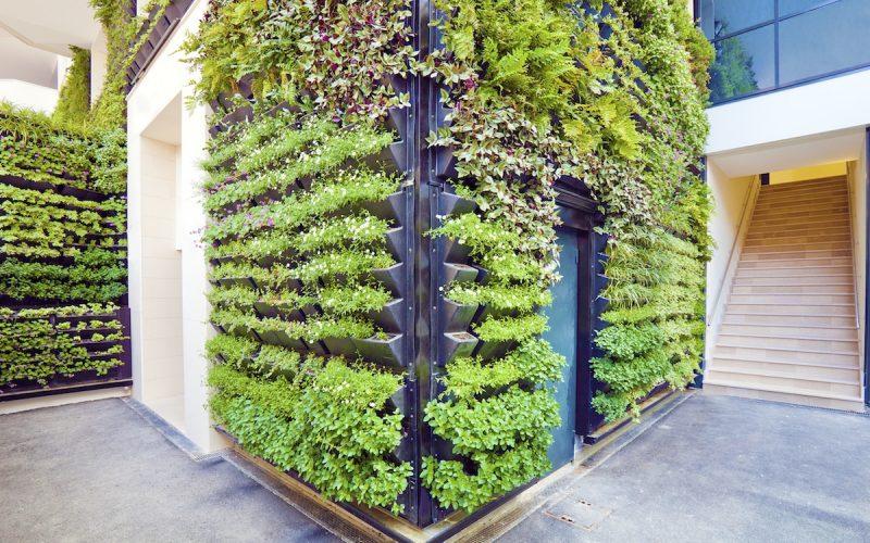 Green walls vertical gardens
